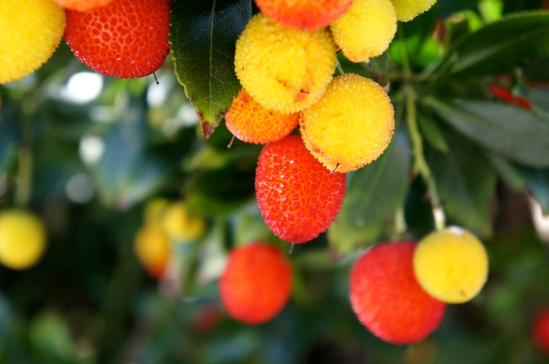 colours of the strawberry tree